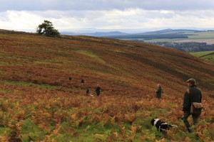 A day shooting grouse in the Scottish Borders