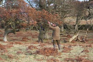 Borders grouse shoots